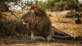 4K Africa Animal Wallpaper HQ