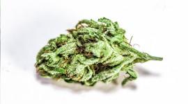 4K Weed Photo Download