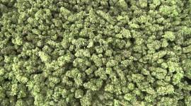 4K Weed Wallpaper 1080p