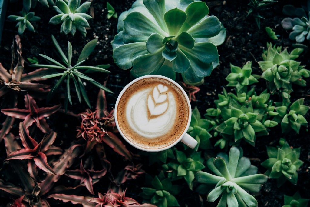Cappuccino Photography wallpapers HD