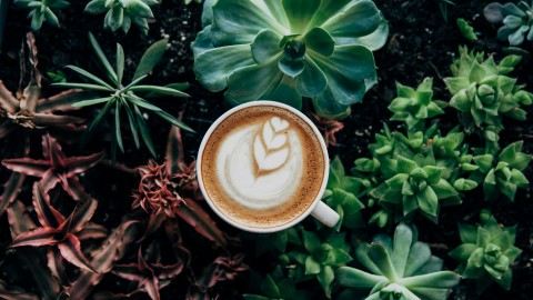Cappuccino Photography wallpapers high quality