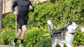 Dog Leash Wallpaper 1080p