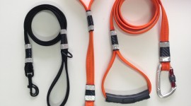 Dog Leash Wallpaper For IPhone