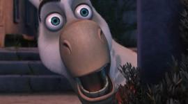 Donkey Xote Photo