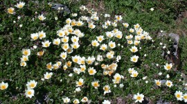 Dryas Photo