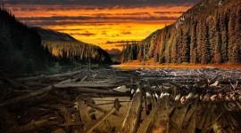 Forest River Sunset Image Download