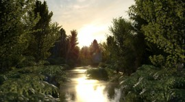 Forest River Sunset Photo Download