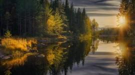 Forest River Sunset Wallpaper