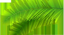 Palm Branch High Quality Wallpaper