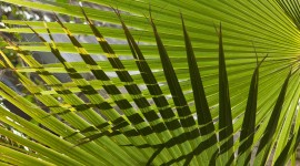 Palm Branch Wallpaper