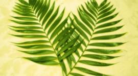 Palm Branch Wallpaper Download