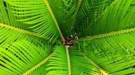 Palm Branch Wallpaper Download Free