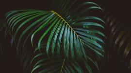 Palm Branch Wallpaper For Desktop