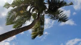 Palm Branch Wallpaper Free