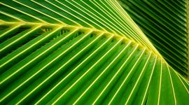 Palm Branch Wallpaper HD