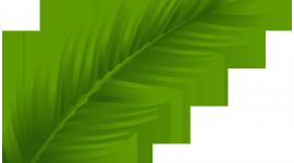 Palm Branch Wallpaper HQ