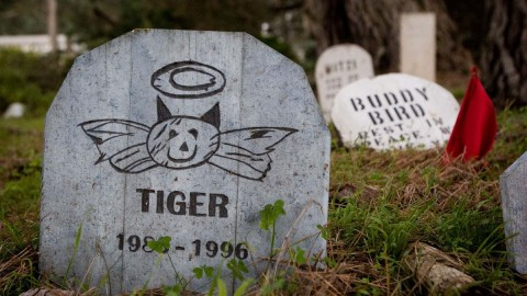 Pet Cemetery wallpapers high quality
