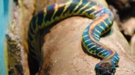 Rare Snakes Wallpaper