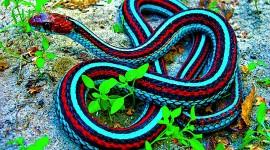 Rare Snakes Wallpaper For Desktop