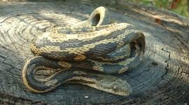 Rare Snakes Wallpaper Free