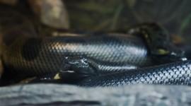 Rare Snakes Wallpaper HD