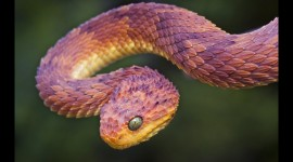 Rare Snakes Wallpaper High Definition