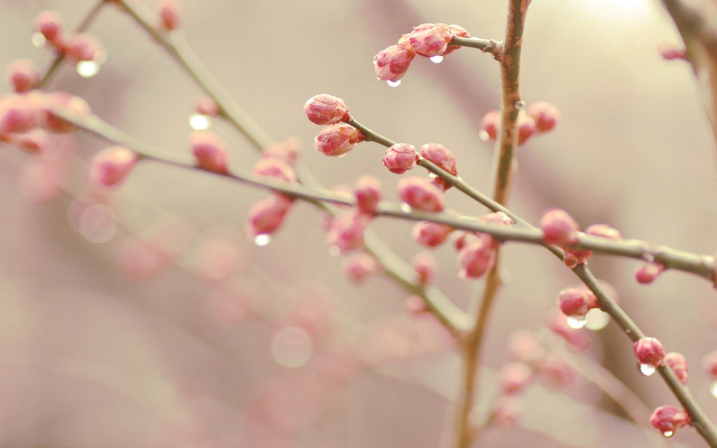 Spring Buds wallpapers HD
