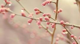 Spring Buds Best Wallpaper