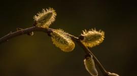 Spring Buds Wallpaper For Desktop