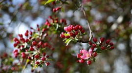 Spring Buds Wallpaper Gallery