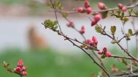 Spring Buds Wallpaper HQ