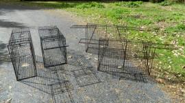 Traps Wallpaper Download Free