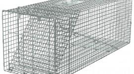 Traps Wallpaper High Definition