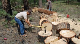 Trees Are Cut Photo Download