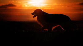 4K Animals Sunset Desktop Wallpaper
