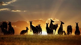 4K Animals Sunset Wallpaper Download
