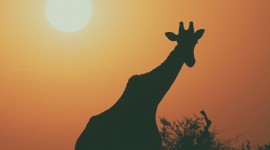 4K Animals Sunset Wallpaper For Android