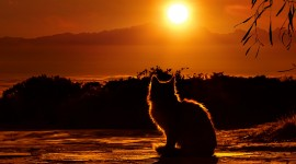 4K Animals Sunset Wallpaper For IPhone