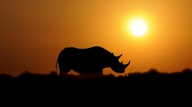 4K Animals Sunset Wallpaper Gallery