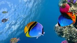 4K Sea Depth Wallpaper Download Free