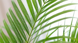 Areca Wallpaper For IPhone Free
