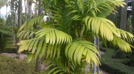 Areca Wallpaper Free