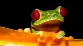 Bright Frogs Desktop Wallpaper