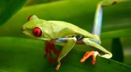 Bright Frogs Desktop Wallpaper For PC