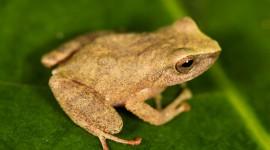Bright Frogs Wallpaper 1080p