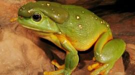 Bright Frogs Wallpaper