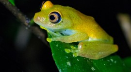 Bright Frogs Wallpaper Download
