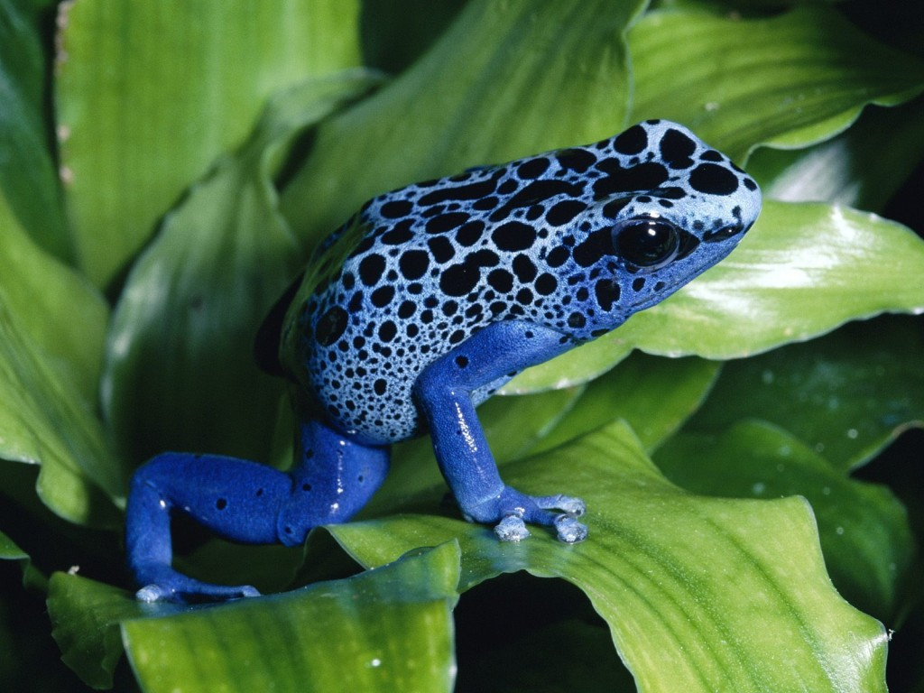 Bright Frogs wallpapers HD