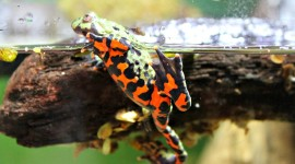 Bright Frogs Wallpaper Free