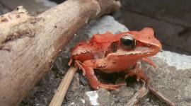 Bright Frogs Wallpaper Full HD